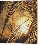 Sun In Grass Panoramic Wood Print