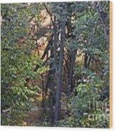 Sun Light In The Woodland  Wood Print