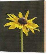 Sun Lit Wood Print by Dean Bennett