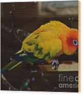 Sun Parrot Wood Print