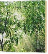 Sun Rays Through Black Walnut Leaves Wood Print