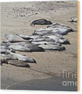 Sunbathing Elephant Seals Along A Beach At Point Reyes California . 7d16063 Wood Print by Wingsdomain Art and Photography