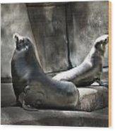 Sunbathing Seals Wood Print
