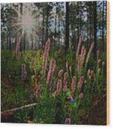 Sunburst On Elegant Liatris Wood Print
