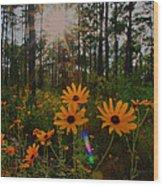 Sunburst On Sunflowers Wood Print
