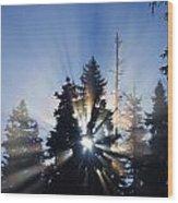 Sunburst Through Silhouetted Pine Trees Wood Print