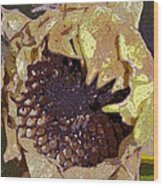 Sunflower 13 Wood Print