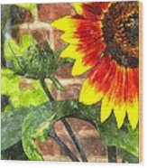 Sunflower 2 Sf2wc Wood Print