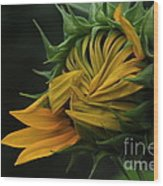 Sunflower 2012 Wood Print