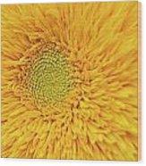 Sunflower 2881 Wood Print