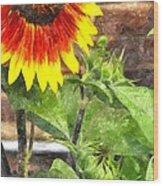 Sunflower 3 Sf3wc Wood Print