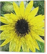 Sunflower 5 Sf5wc Wood Print