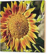 Sunflower And Bud Wood Print