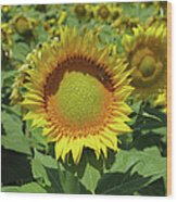 Sunflower And Honeybee July Two K O Nine Wood Print