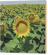 Sunflower And Honeybees July Two K O Nine  II Wood Print