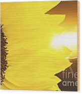 Sunflower And Sunset Wood Print