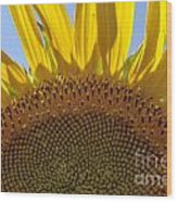 Sunflower Arch Wood Print