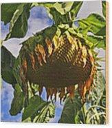 Sunflower At Fall Wood Print