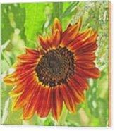 Sunflower Beauty Wood Print