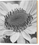 Sunflower Bloom Black And White Wood Print
