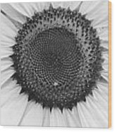 Sunflower Center Black And White Wood Print