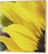 Sunflower Closeup In Landscape Wood Print