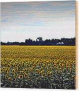 Sunflower Farm In North Dakota Wood Print