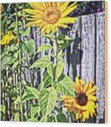 Sunflower Fence Wood Print