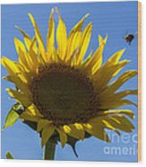 Sunflower For Snack Wood Print