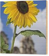 Sunflower In Balboa Park Wood Print