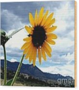 Sunflower In The Rockies With Friends Wood Print by Donna Parlow