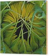 Sunflower Kisses Wood Print
