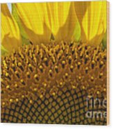 Sunflower Macro Wood Print