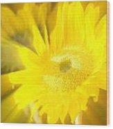 Sunflower Magic Wood Print