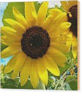 Sunflower Medley Wood Print