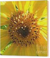 Sunflower No.10 Wood Print