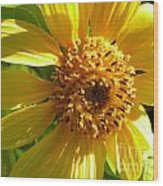 Sunflower No.11 Wood Print