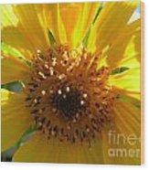 Sunflower No.15 Wood Print