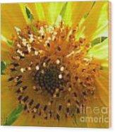Sunflower No.16 Wood Print