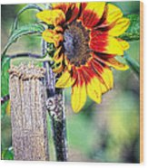 Sunflower On A Stick Wood Print