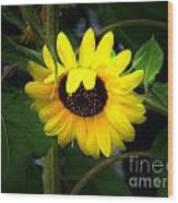 Sunflower One Wood Print