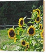 Sunflower Patch Wood Print