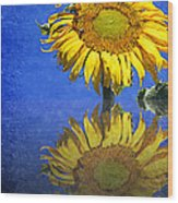 Sunflower Reflection Wood Print