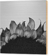 Sunflower Rising #1 Wood Print