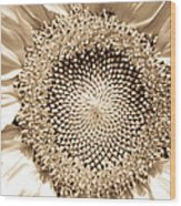 Sunflower Seeds Wood Print