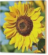 Sunflower Small File Wood Print