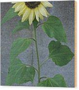 Sunflower Stalk  Wood Print