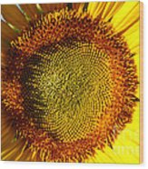 Sunflower Sunburst Wood Print