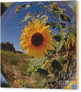 Sunflower Through A Glass Eye Wood Print