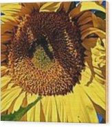Sunflower Up Close Wood Print